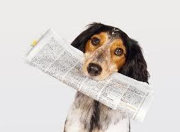 dog with newspaper