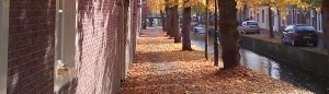 cropped-autumn-leaves.jpg