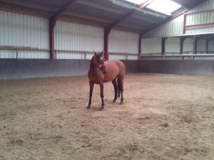 Why equine assisted coaching works (even in the winter).