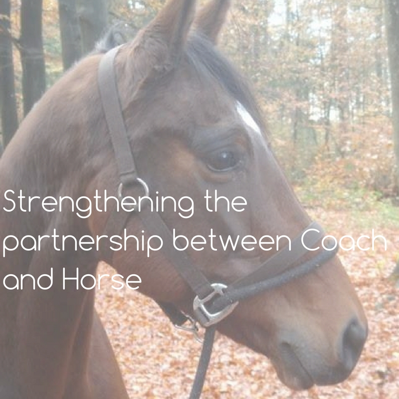 Strengthening the partnership between Coach and Horse (2)