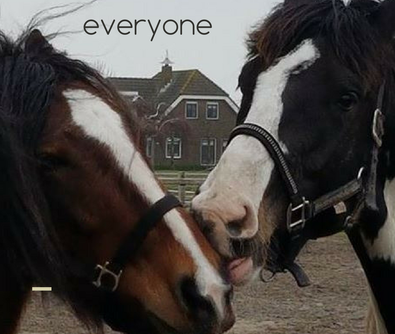 There is a horse for everyone.